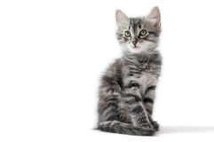 Little kitten on white background. Isolated royalty free stock images