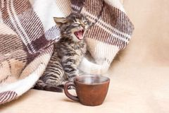 The little kitten woke up and yawns. A cup of coffee in front of royalty free stock photos