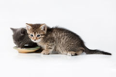 Little Kittens Royalty Free Stock Photos