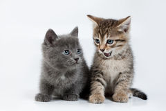 Little Kittens Stock Photo
