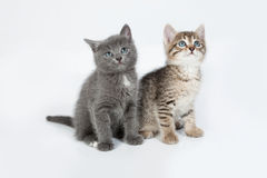 Little Kittens Royalty Free Stock Photo