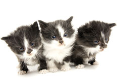 Little kittens. Stock Photography
