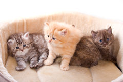 Little kittens Stock Photos