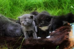 Little Kittens afraid to go out to your mat. Stock Photography