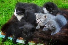 Little Kittens afraid to go out to your mat. Stock Image