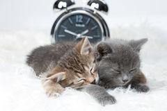 Little Kittens And Alarm Clock Stock Images