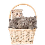 Little kittens in basket looking away and up. isolated on white Stock Photo