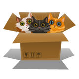 Little kittens in a cardboard box. Three cats Royalty Free Stock Photo
