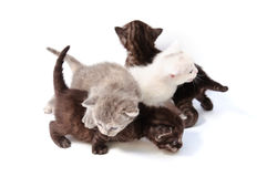 Little kittens play Royalty Free Stock Photos