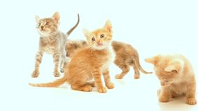 Little kittens stock video footage