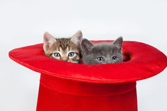 Little Kittens In A Red Hat Stock Image