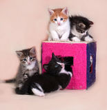 Little kittens sitting on and around scratching posts on gray Royalty Free Stock Photography