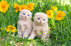 Little kittens sitting in flowers Royalty Free Stock Images