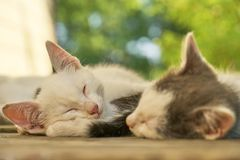 Kittens sleeping together outdoors. Little kittens sleeping together outdoors in summer Stock Photography