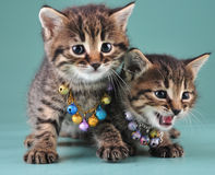 Little kittens with small metal jingle bells beads Stock Images
