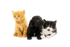 Little kittens and spaniel puppy Stock Photos