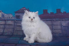 Little kittens walking on the roof Stock Photos