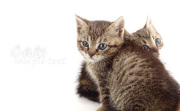 Little kittens on white Royalty Free Stock Photography