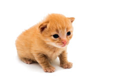 Little kittens Royalty Free Stock Photography