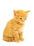 Little kittens Stock Image