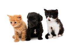 Little kittens Stock Photo