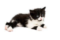 Little kittens Stock Photos