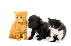 Little kittens Stock Photography