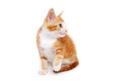 Little Kitty Royalty Free Stock Image