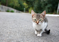 Little kitty Stock Images