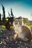 Little kitty. With green sad eyes and blac cat on the background sunset royalty free stock photos