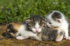 Little kitty Stock Photography