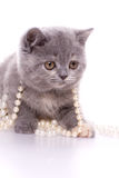 Little kitty. With pearls on a white background royalty free stock photo