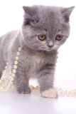 Little kitty. With pearls on a white background royalty free stock photos