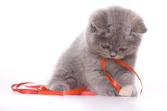 Little Kitty Stock Image