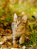 Little kitty in the autumn grass Royalty Free Stock Images