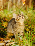 Little kitty in the autumn grass looking up Stock Photos