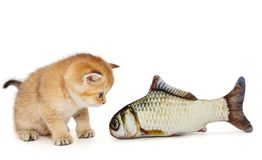Little kitty and big fish. Isolated on white stock photos