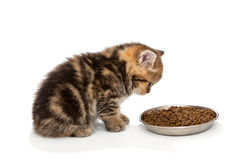 Little kitty eats dry food Stock Photo