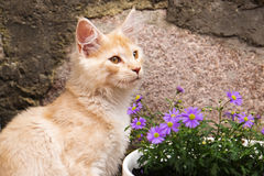 Little kitty and flowers Royalty Free Stock Photography
