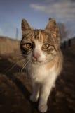 Little kitty Royalty Free Stock Photos