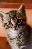 Little Kitty 2 Stock Image