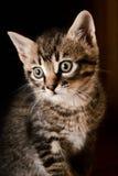 Little Kitty 2 Royalty Free Stock Photos