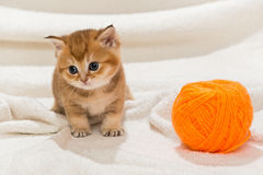 Little kitty and a skein of wool Royalty Free Stock Photo