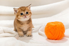 Little kitty and a skein of wool Stock Photography