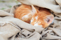 Little kitty is sleeping in piece of tarpaulin Royalty Free Stock Images