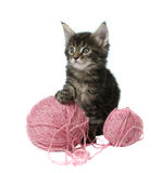 Little kitty with two balls of wool Royalty Free Stock Photography