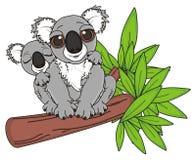 Little koala sleeping on the neck of his mother Royalty Free Stock Photo