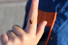 Little ladybug on a boy`s finger stock photography