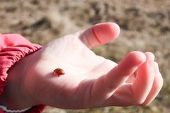 A little ladybug / ladybird walks in a little girl`s hand stock photography