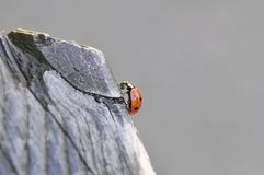 Little ladybug on a tree stock images